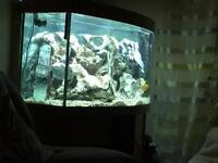 Juwel bow front fish tank ,260ltrs SOLD