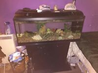 Big fish tank cheap