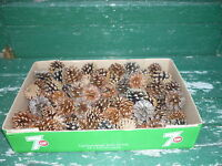 7KG. BOXES OF 2IN. PINE CONES