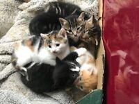 Kittens for sale. £150 each.