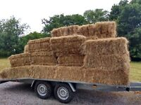 This seasons standard square hay bales for sale, 300 qty at Great Chart, Kent TN26 1JJ.