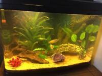 Tropical fish tank full setup