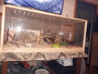 3 female guinea pigs 5 momths old with eco friendly large home and a metal run for them