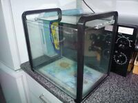 Glass fish tank and accessories - ideal for 1/2 cold water fish