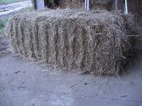 Hay & Straw Bales