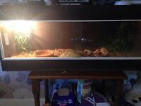 Corn snake and full viv set up