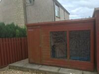 Large Outdoor Dog Kennel / Shed (10' x 6') for sale