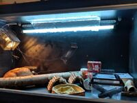 Black Vivarium plus accessories