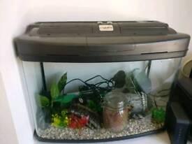 60L fish tank and supplies
