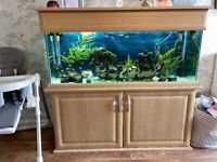 4ft Fish Tank 250 Litre With Full Set Up