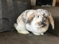 Beautiful friendly Bunny looking for a new home!
