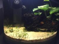 Aquarium Fishtank