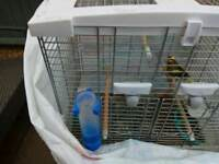 Canary male for sale with cage