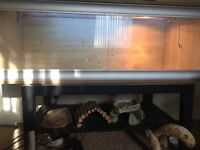 Reptile viv with accessories and bulbs. Ideal for beardies and snakes