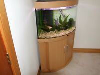 Corner fish tank in beech