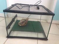 Large reptile vivarium with accessories for sale £50