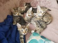 Cutest kittens need a new home
