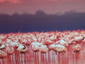 Large canvas of flamingoes