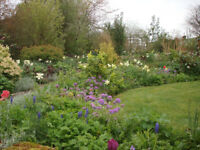 Gardener - experienced and friendly