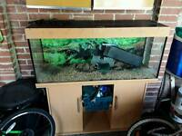 Juwel rio 240 4ft fish tank full set up