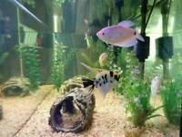 Complete Tropical Aquarium set up for sale