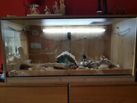 quality 4ft x2ft reptile vivarium, Full set up