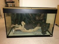 Fluval Roma 125 Litre Aquarium with LED Lighting Oak Finish and Cabinet - Excellent Condition