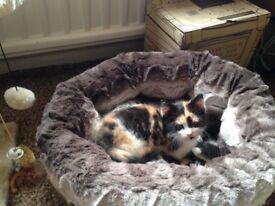 Cat/kitten faux fur bed
