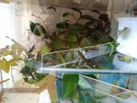 Stick insects