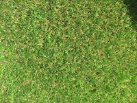 3.6 x 3.6 metre 25mm Tri Colour artificial grass offcut