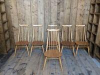 Ercol moustache chairs x6 Windsor goldsmith gold label mid century modern vintage elm high gplanera