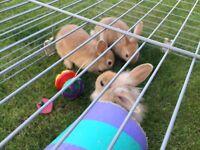 Baby Bunnies/rabbits