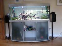 Aquatlantis 5 foot bow fronted aquarium and stand.
