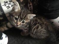 2 Kitten