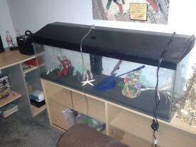 4 foot fish tank