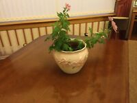 "Large Pretty Pink Planter / Plant Pot Holder (7"" in diameter)"
