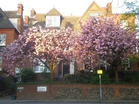 LARGE, GORGEOUS, Light, Quiet, RGF flat on prestigious Hampstead St with own entrance