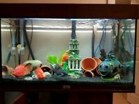 Dark wood juwel rio 125 fish tank and stand