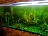 Fish aquarium with fishes