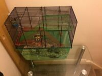 2 female gerbils with cage and accessories for sale