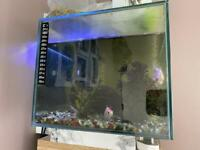 Fluval edge fish tank with fish