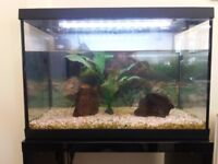Fish Tank 70l [Fully Loaded]