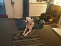 Wanted flat/studio/house for working professional with trained dog