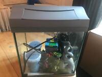 Tetra Fish Tank
