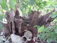Stunning Architectural Tree Stump for Garden/Patio