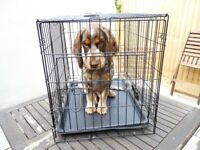 Small dog/puppy crate and portable bed.