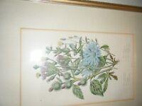 Pair of antique botanical flower prints, framed