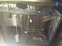 Cockatiel and budgie with flight cage and many toys