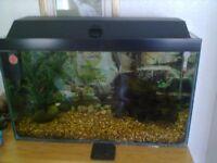 Large Freshwater Aquarium with Full Setup and Fish