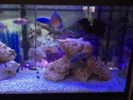 Large juwel fish tank